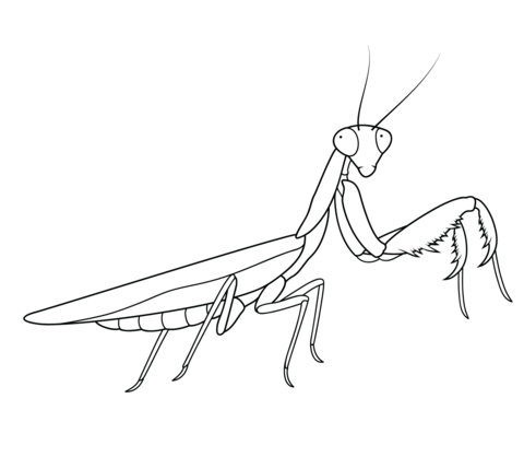 Praying Mantis coloring page from