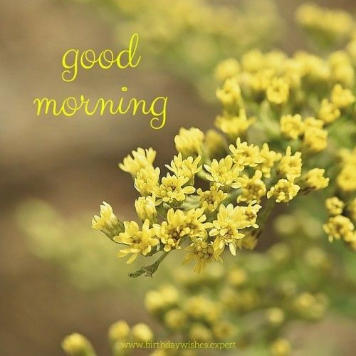 60 good morning images with the most beautiful flowers pinterest good morning image with yellow flowers mightylinksfo