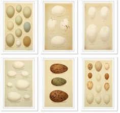 #Free #Vintage #Egg #images from Vintage Printable... all free downloadable, high-resolution, out-of-copyright  images of vintage prints. A real resource for the vintage lover.