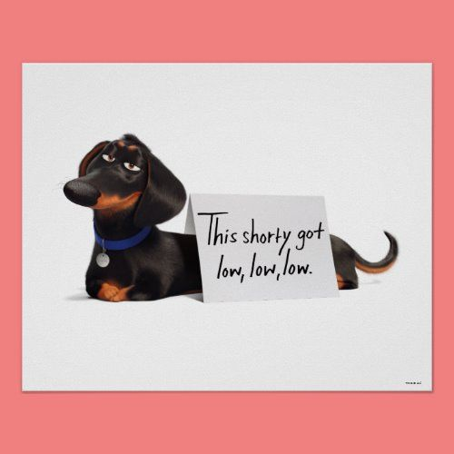Secret Life Of Pets Buddy Low Low Low Poster Zazzle Com In 2020 Secret Life Of Pets Secret Life Pets Movie