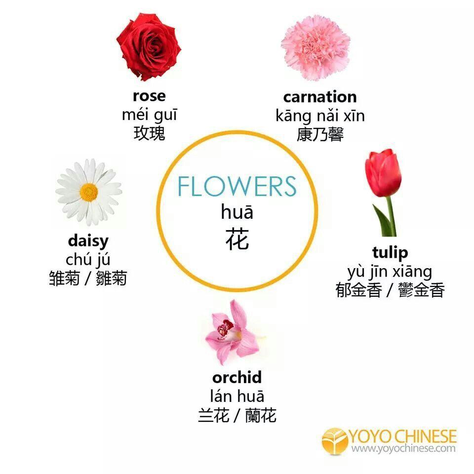 Flowers Chinese Language Chinese Language Learning Mandarin Chinese