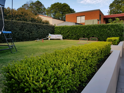 Lawn mowing Canada Bay is part of lawn Maintenance Canada - Fox Mowing your Garden Cleanup And Lawn Care Specialists  We Provide Quality Lawn And Garden Maintenance, Hedging, Weeding, Mulching, Drain Cleaning Services In Canada Bay