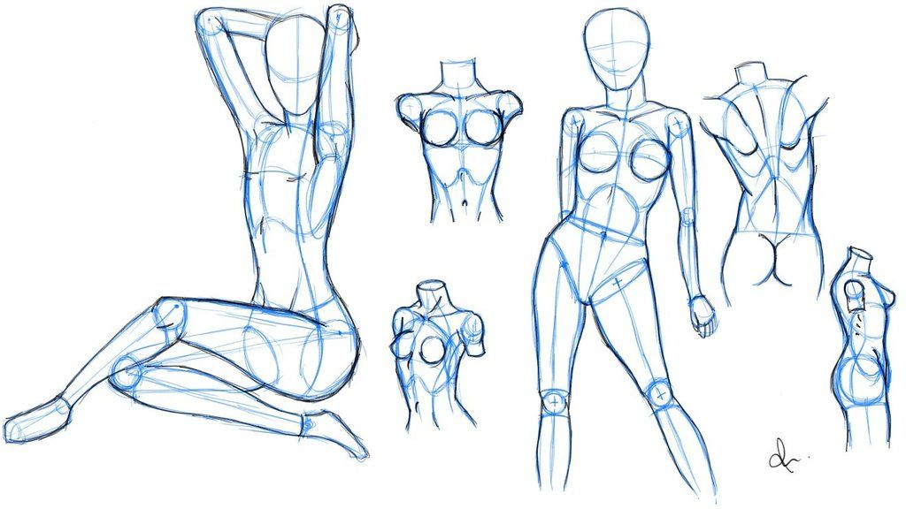 how to sketch anatomy - Google Search