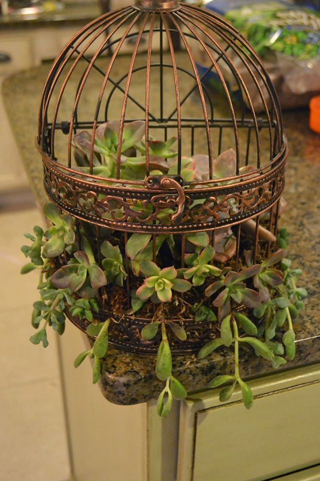 Merveilleux ... Lights #decorating Bird Cages For Christmas #decorating With An Empty  Birdcage #decorative Birdcage Michaels #diy Bird Cage Decorations #home  Interior ...