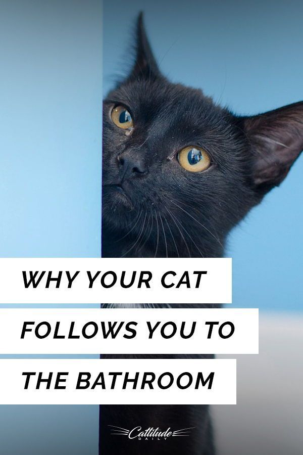 Nearly Every Cat Owner Cat Agree Cats Love To Follow Us To This Place In Our Home Find Out Why Here Cattitudedaily Cat Parenting Pet Care Cats Cat Behavior