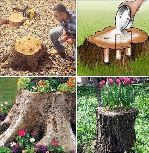 Turn Tree Stumps Into Gorgeous Planters