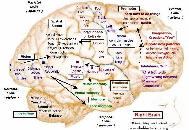 Brain Function Map Hidden Talents websiteinteresting site that looks at Brain Maps