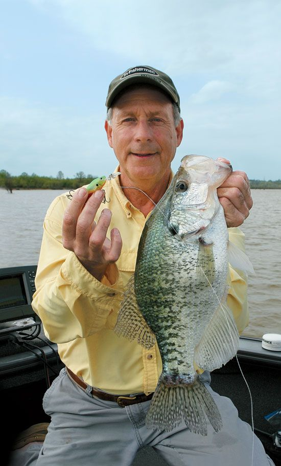Crankbaits for crappies fishing pinterest shops for Crappie fishing secrets