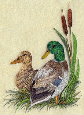 A mallard duck pair resting in the cattails. #thegreatoutdoors