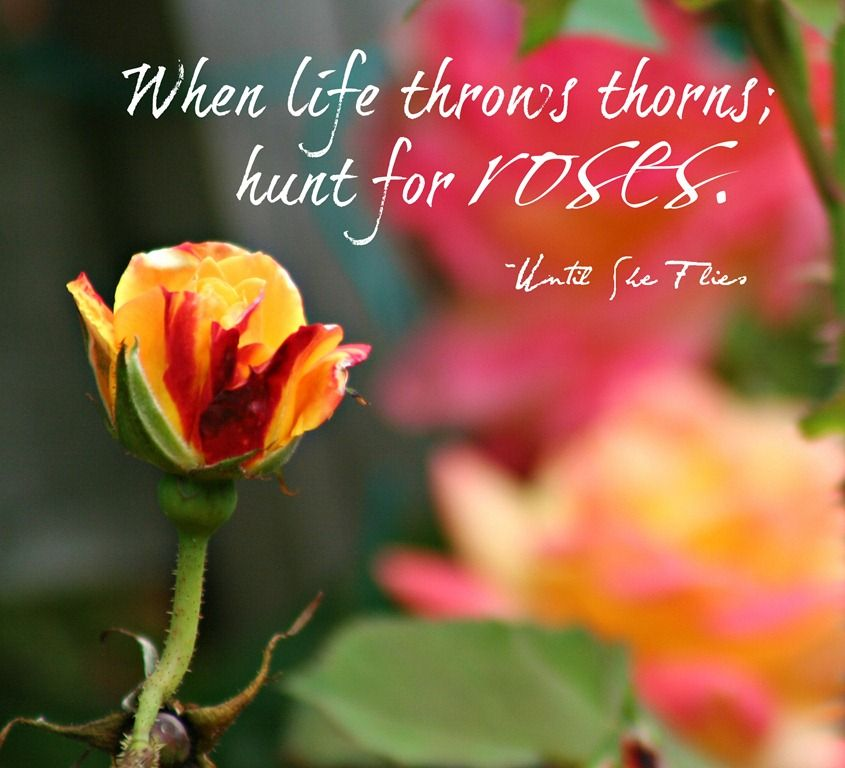 Beautiful Rose Quote Roses Are Quotes Rose Quotes Flower Quotes
