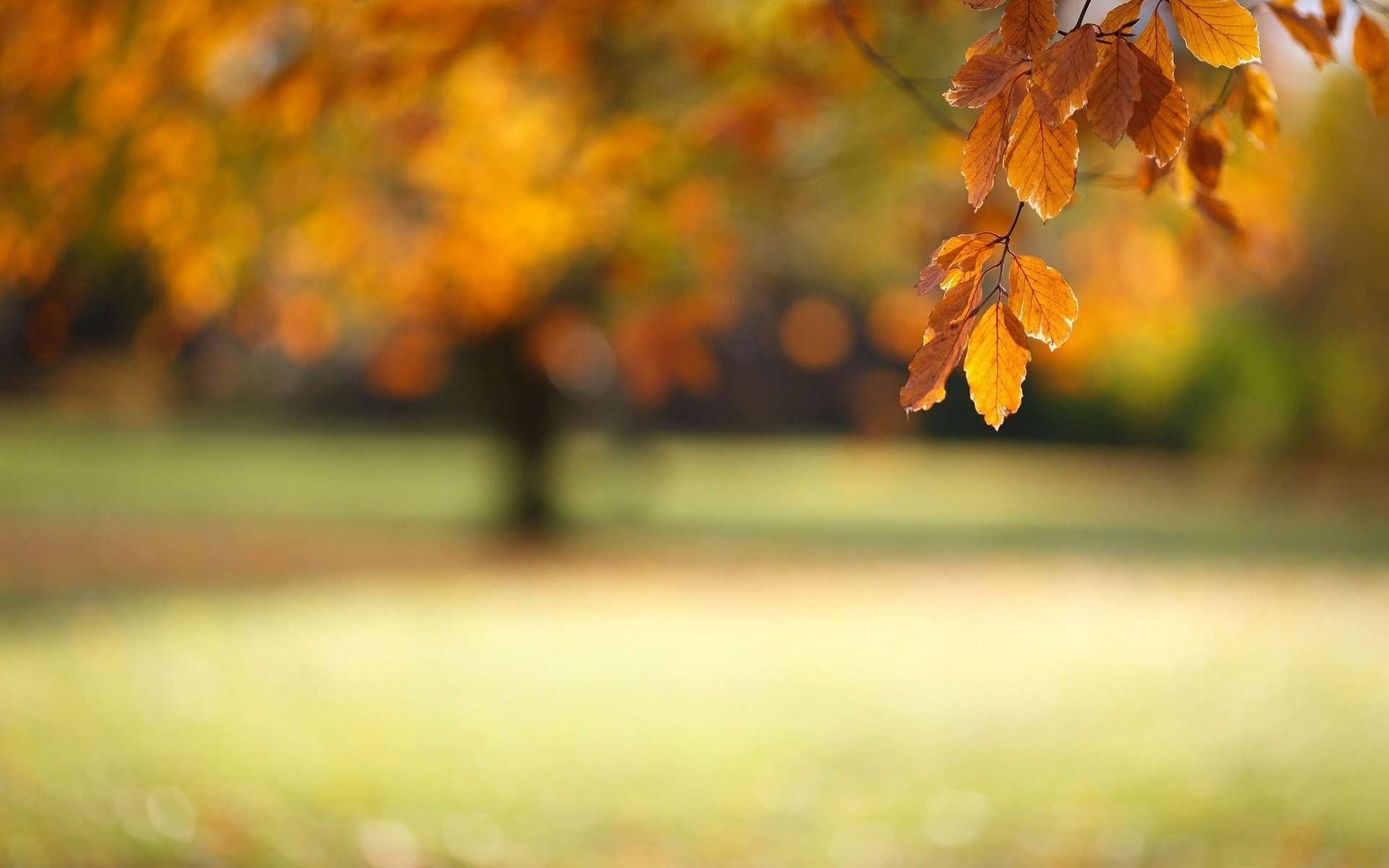Autumn Leaves Screen Images Autumn Leaves Wallpaper Blurred Background Blur Photo Background