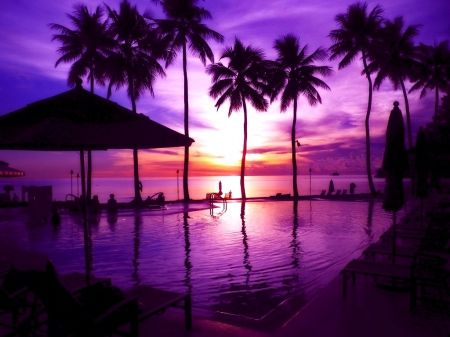 Purple Beauty Of Tropical Sunset