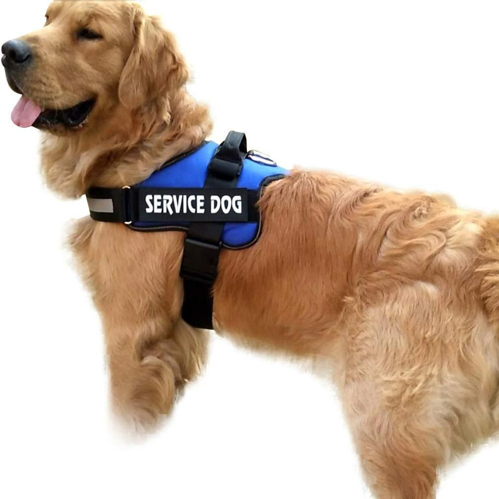 Padded Service Dog Vest Harness With Handle Service Dogs Dog