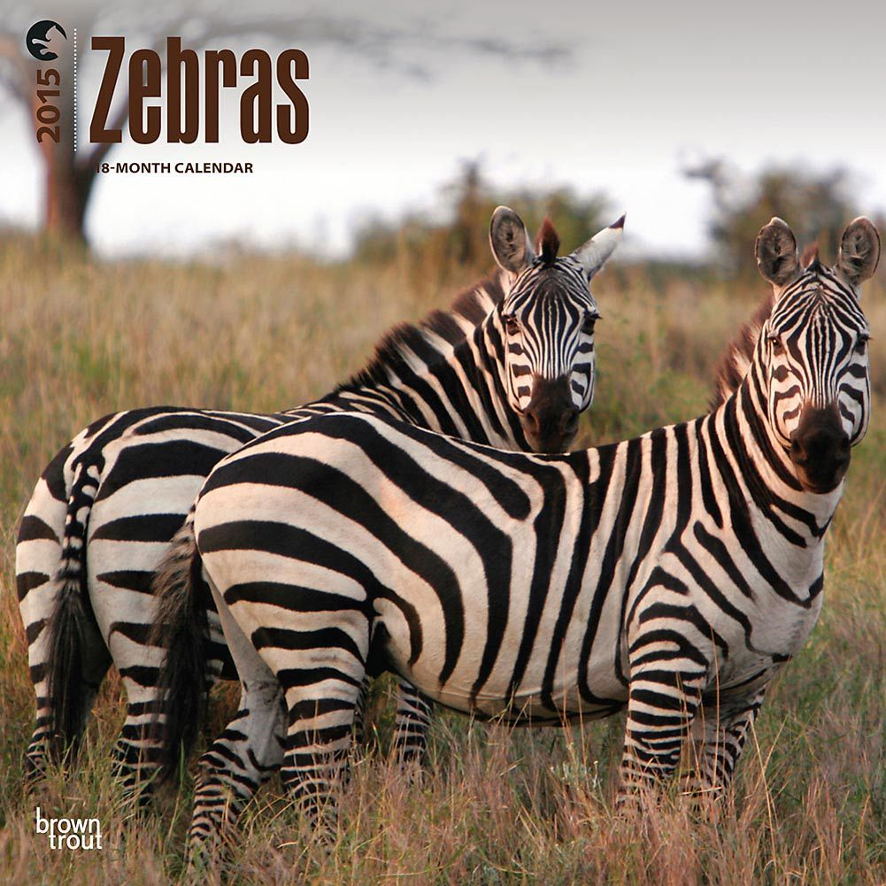 De 14.95€ al 50% menos!  #cebras #calendarios #descuentos
