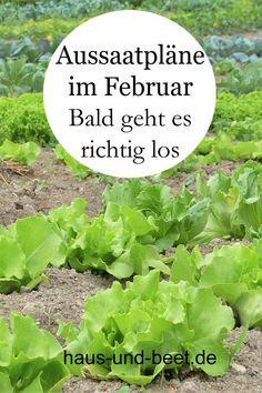 Aussaatpläne im Februar Im Frühjahr kannst du schnell wachsendes Gemüse ernten Im Winter wird das langsam wachsende Gemüse erntbar sein Baue Gemü...