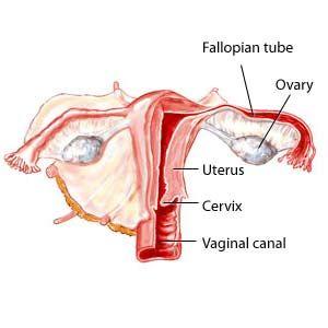 vaginal canal of Pics