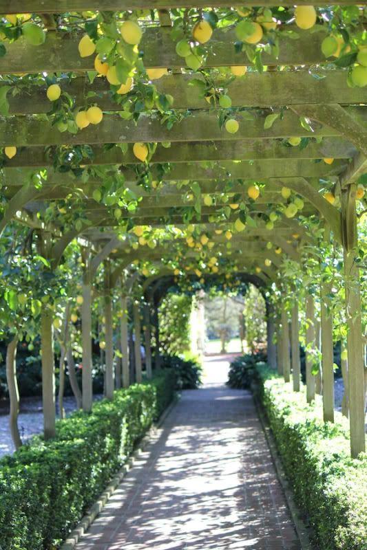 Rboles frutales en el dise o del jard n el dise o - Arboles ornamentales para jardin ...