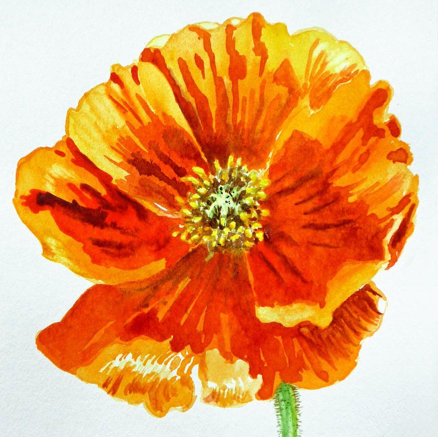 Poppy Painting By Irina Sztukowski Poppy Fine Art Prints And