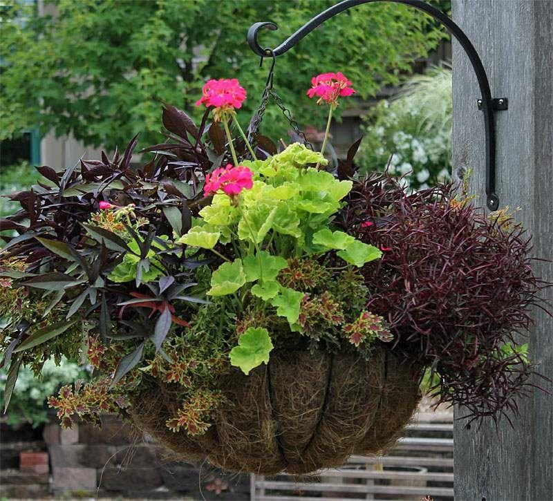 aprende los secretos para combinar plantas en macetas o jardineras
