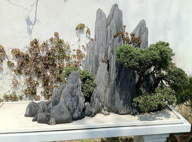 留園盆景1