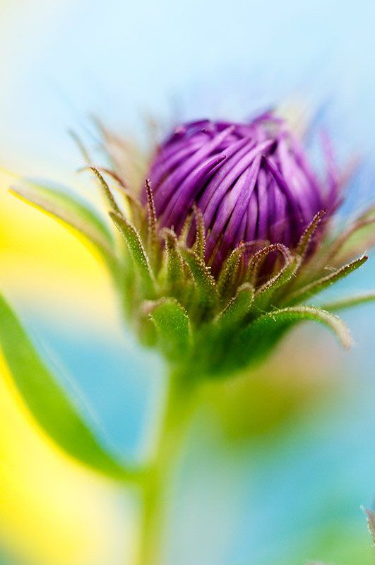 5 Macro Photography Tricks to Make Your Images Stand Out