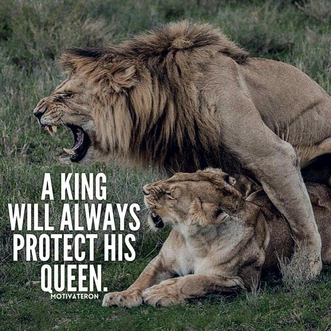 Citaten Love Queen : Always . mr. & mrs. lion quotes relationship quotes life quotes