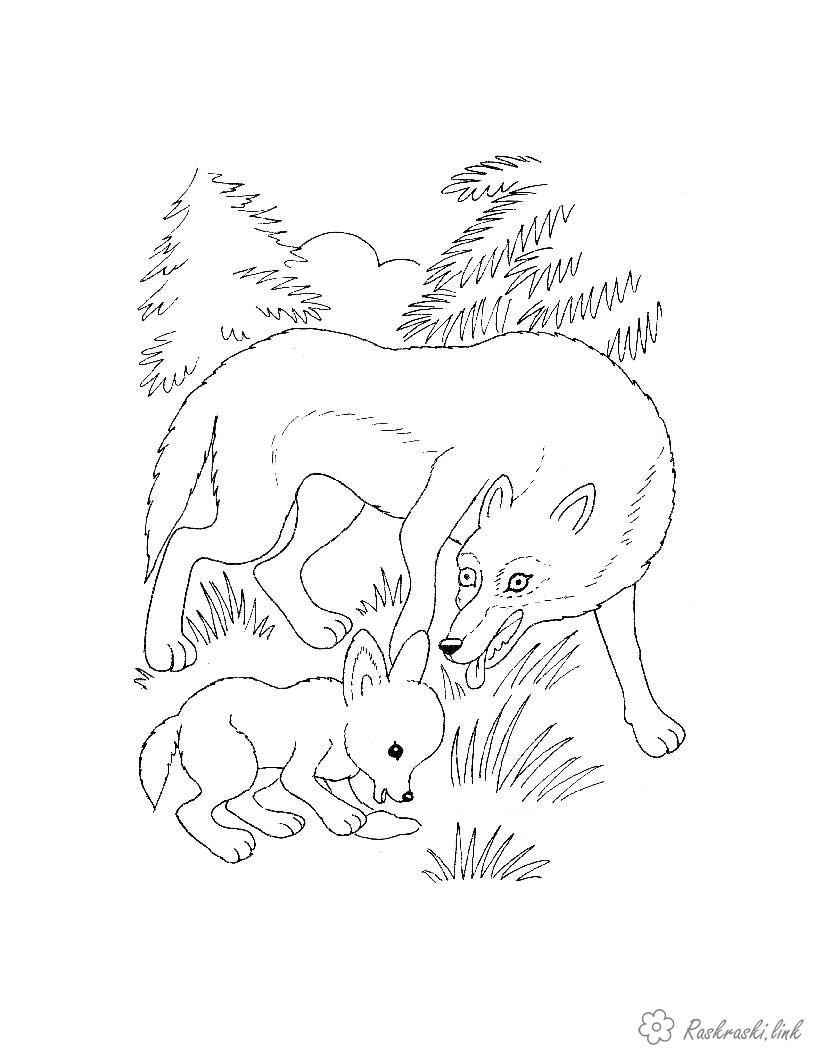 раскраска для детей, животные, волки, лес | Раскраски с ...