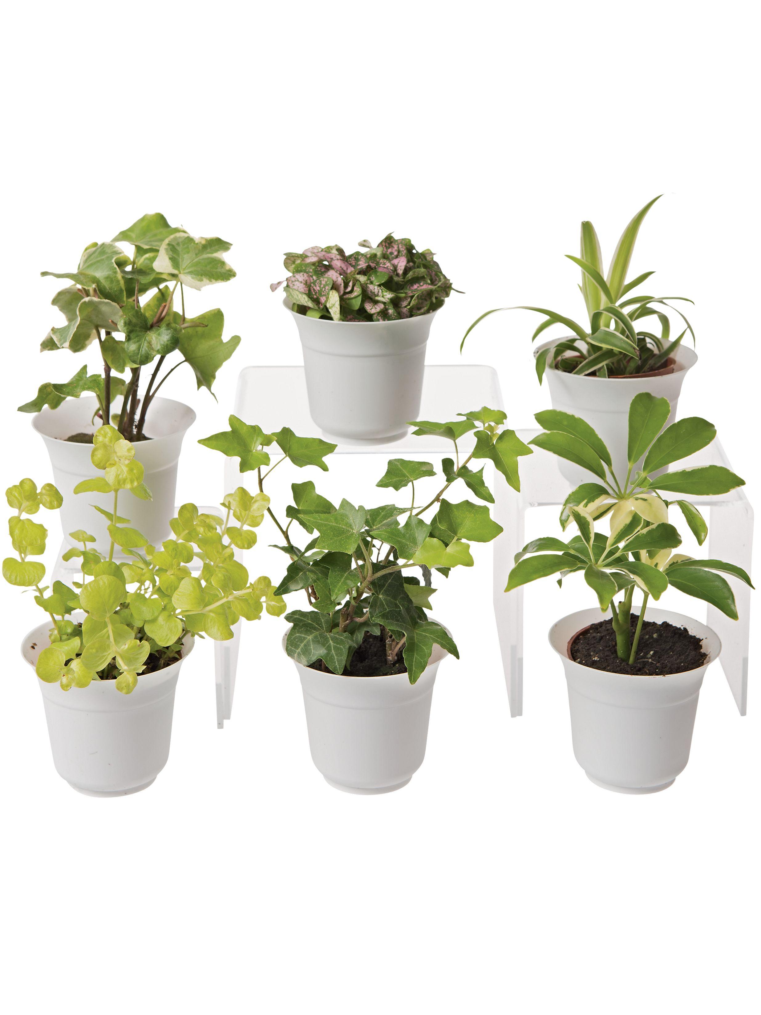 Low Light Terrarium Plant Collection Set Of 6 Gardening