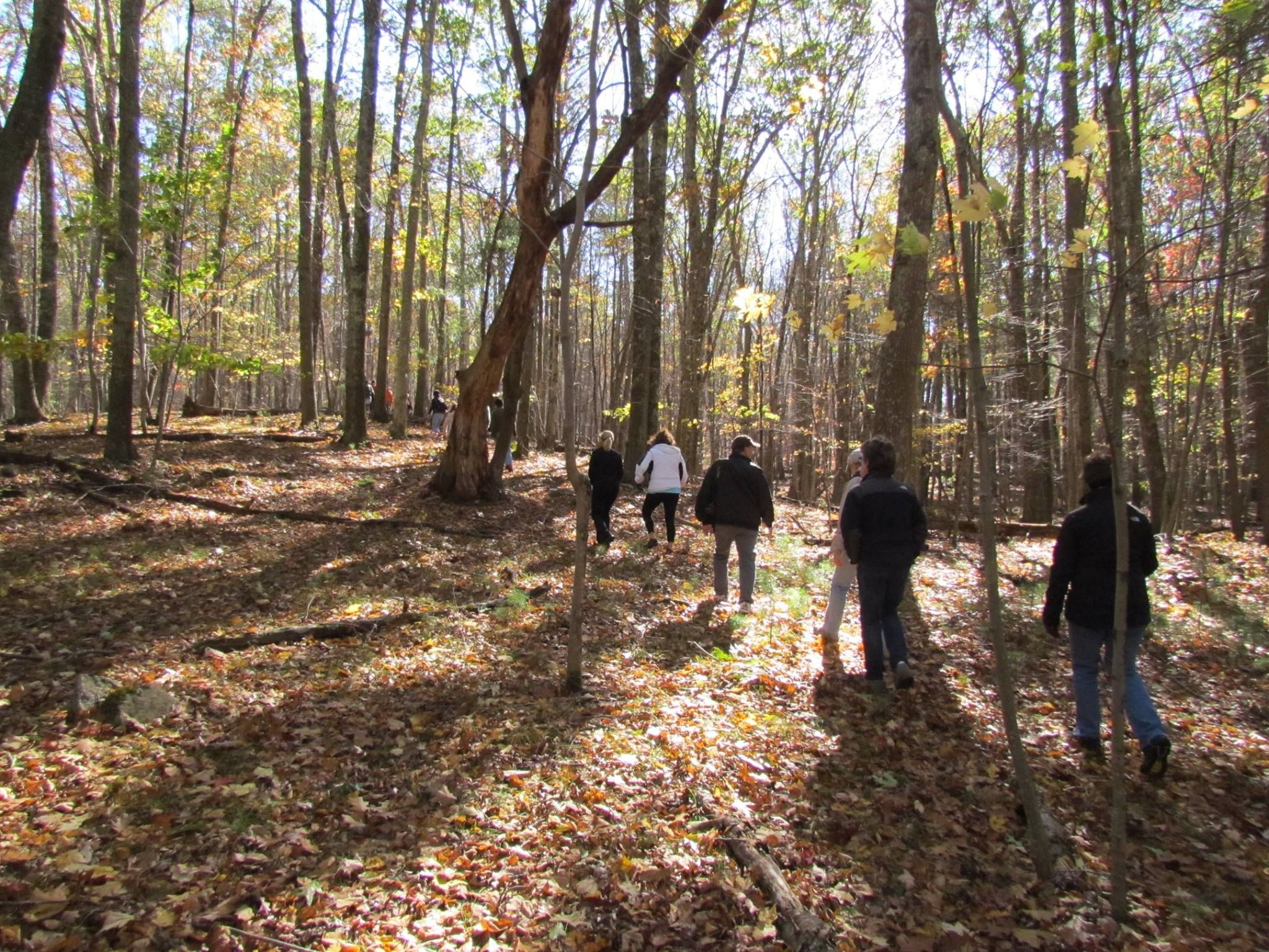 Hiking along the new trails at Langhammer.  Guided hike led by Ashford Conservation Commission on Oct 23 2016. Photo Credit Arlene Avery. https://plus.google.com/photos/+GwenHaaland/albums/5530271929637834257