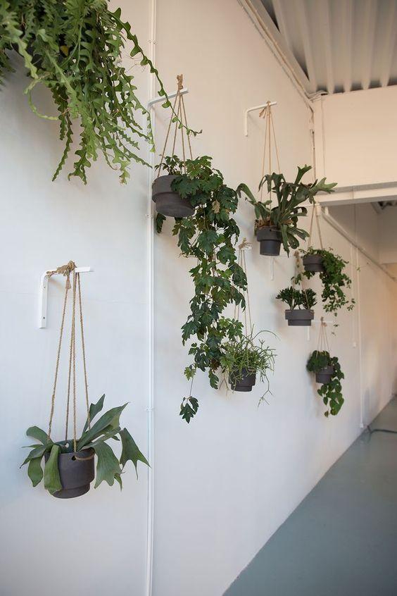 16 plants Hanging crafts ideas