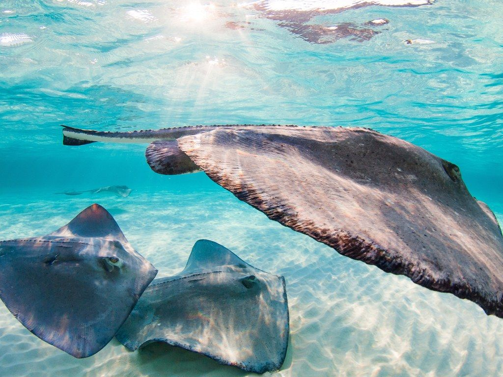 This Is the Best Caribbean Island for You | Caribbean, Grand cayman