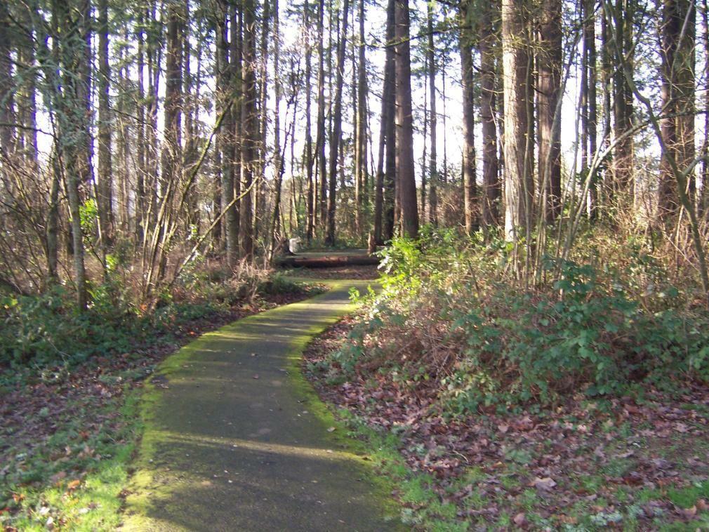 Fir Grove Park In Beaverton Oregon Our Neighborhood Gem