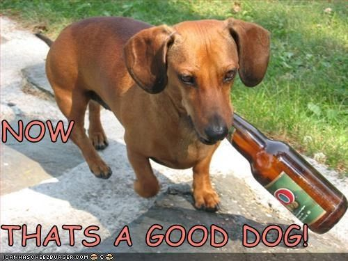 Funny Dachshund Pictures With Captions Dachshund Page 36