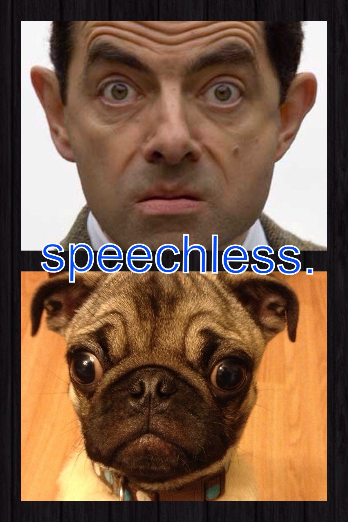 I Came To Realize My Pug Looks Like Mr Bean Pugs French Bulldog Bulldog