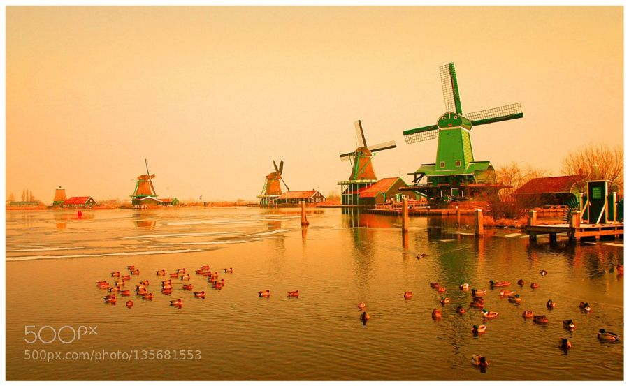 Popular on 500px : Ducks on the Zaan by fotopeter45