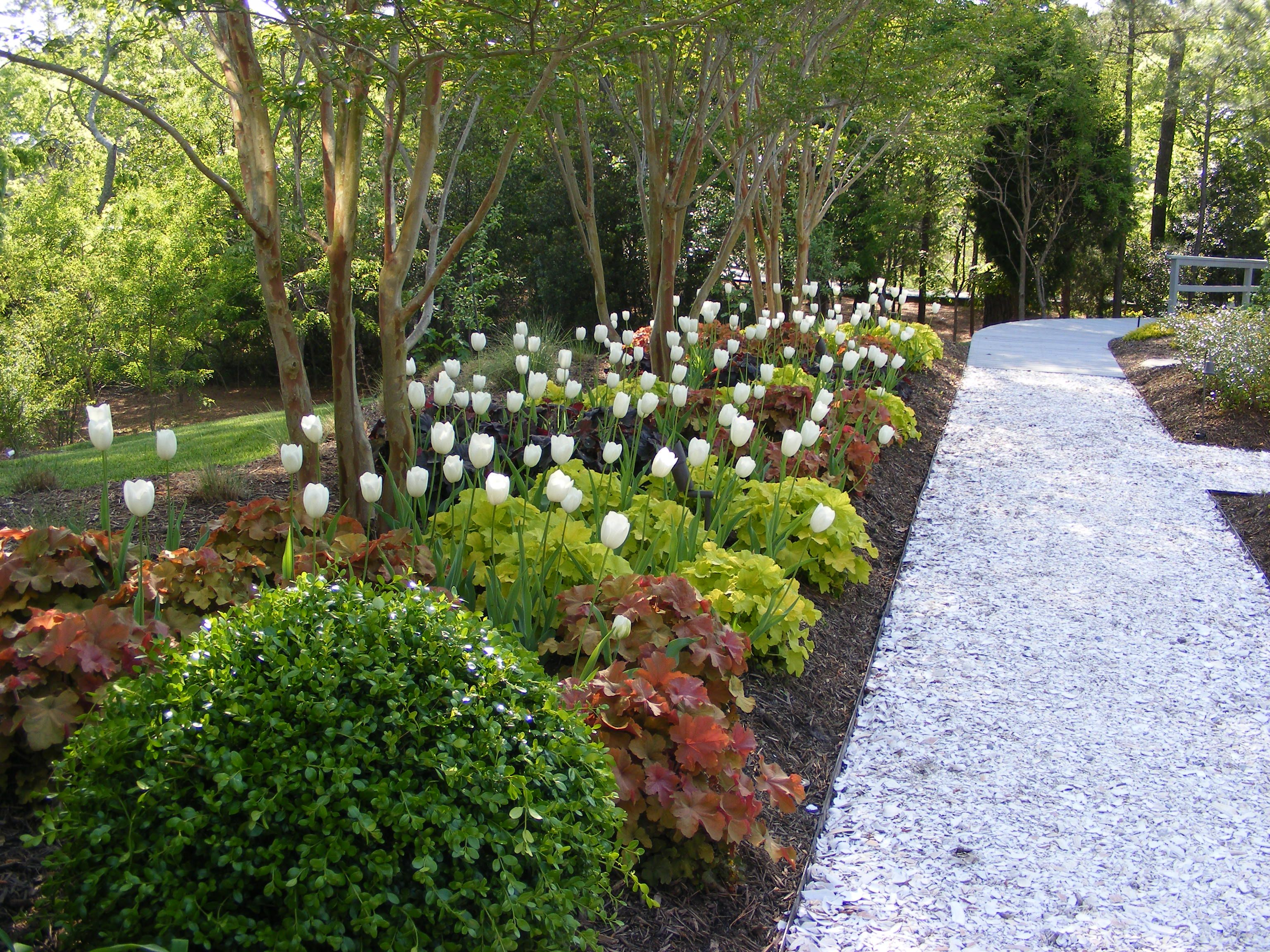 Garden path created with oyster shells our garden for Crushed oyster shells for landscaping
