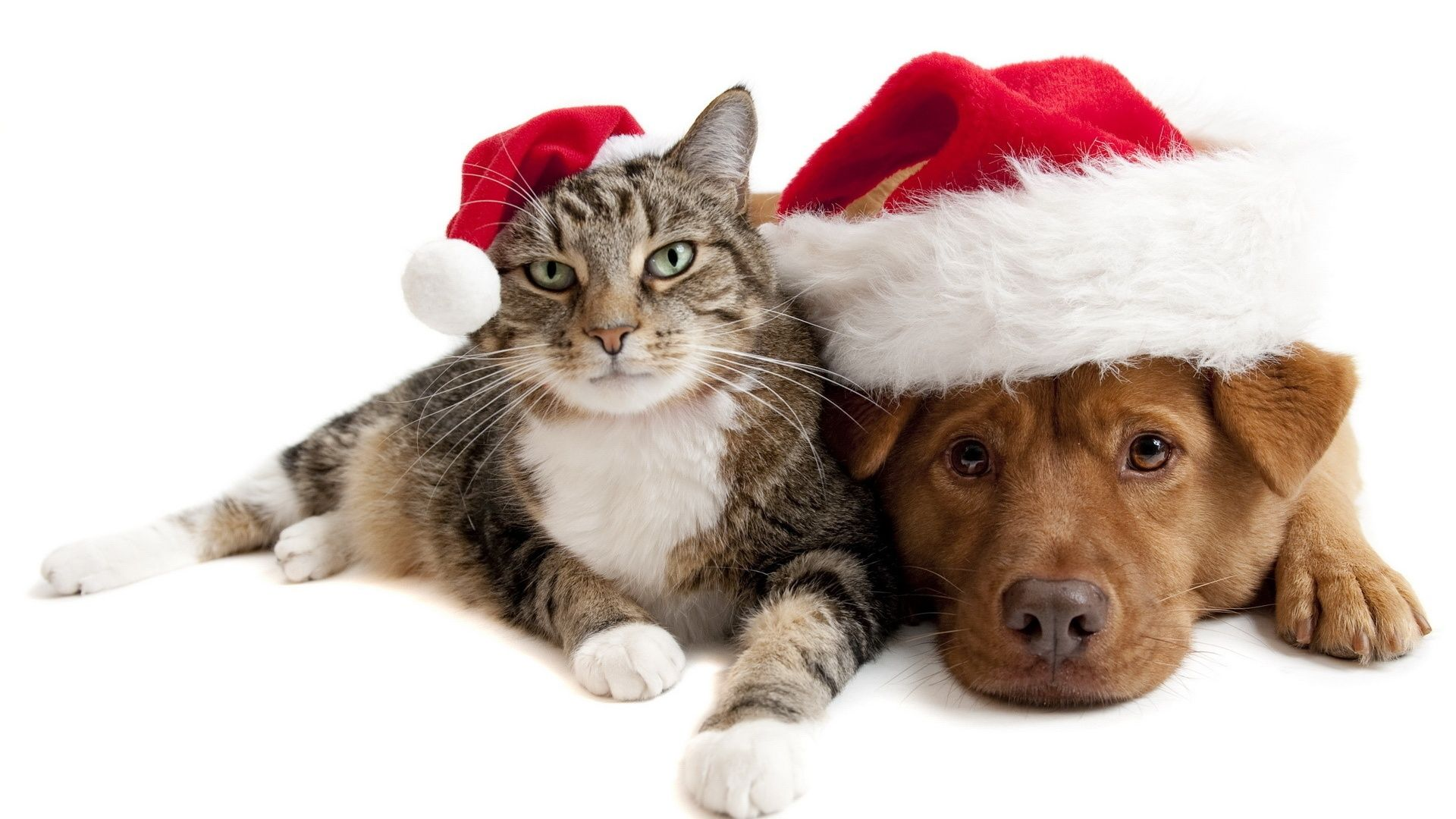 Cute Dog And Cat Wallpaper Wallpapers Backgrounds Images Art Photos Pet Holiday Christmas Cats Christmas Dog