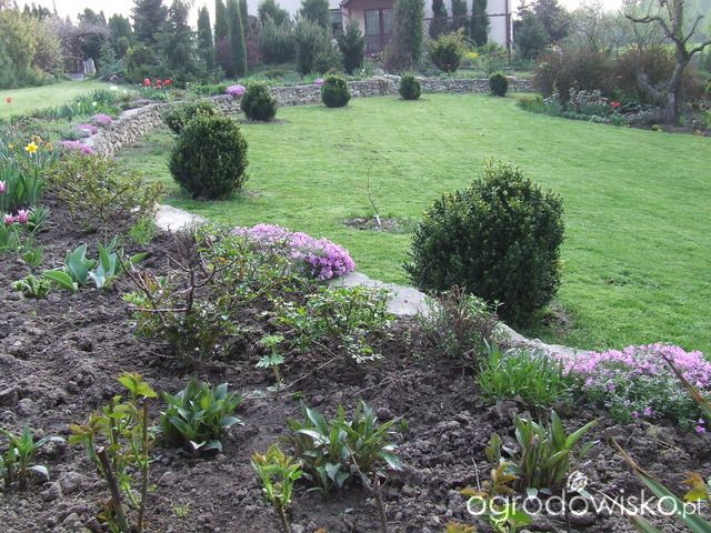 Kolorowy ogród na piasku - strona 7 - Forum ogrodnicze - Ogrodowisko