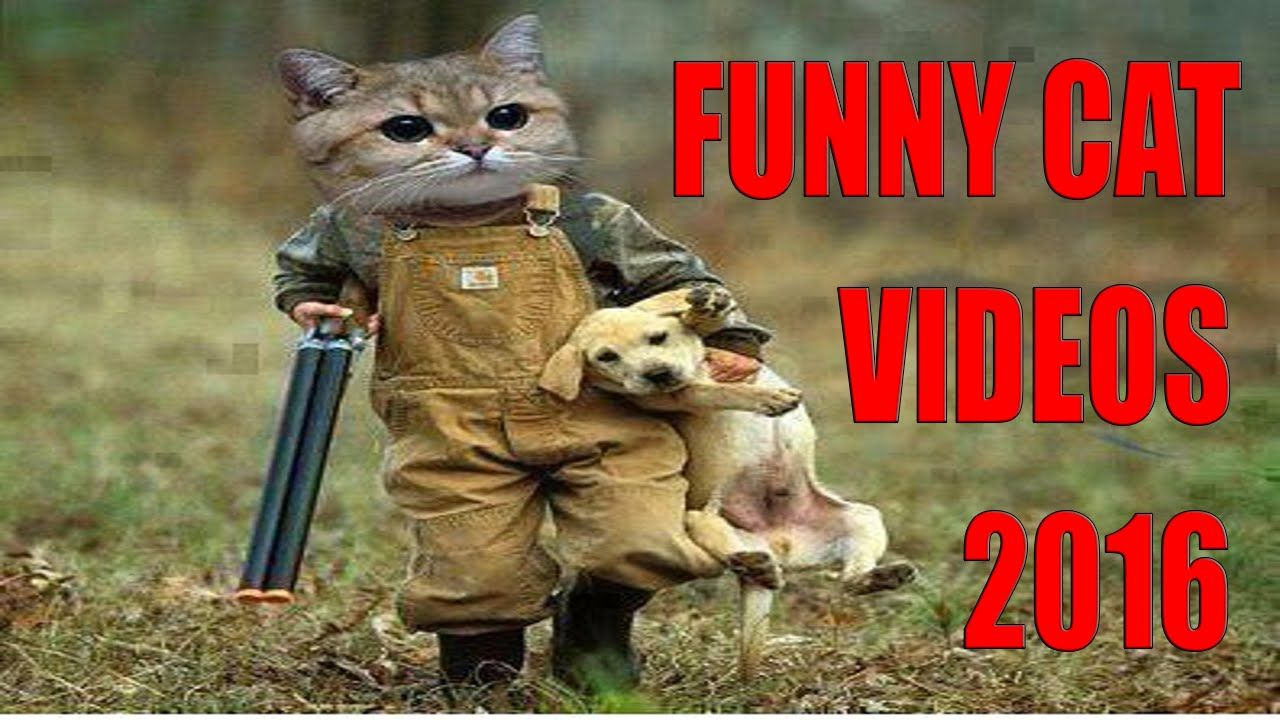 Funny Cat Videos 2016 You Can t Stop Laughing [Part 1] Check