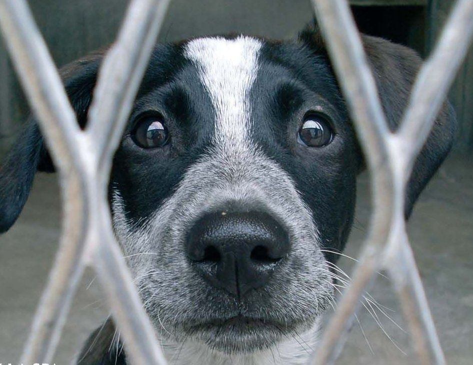 Adopter Un Chien Dans Un Refuge Refuge Animalier Animaux De