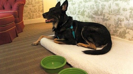 Hotel Chains Where Pets Stay Free Pet Friendly Hotels Dog Friends Pets