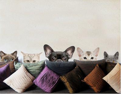 No.273 Katzen mit Hundeblick