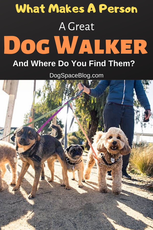 What Makes A Person A Great Dog Walker and Where Do You Find Them? dog walking tips. dog walking ideas. dog walker tips #dogwalker #pets #dogs #walking #dogwalking #petsitting #dogsitting #rover…
