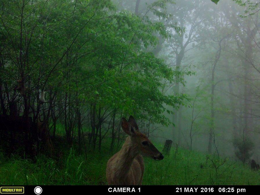 Treasures, Travel, and Tales: Wordless Wednesday - Deer Visitors