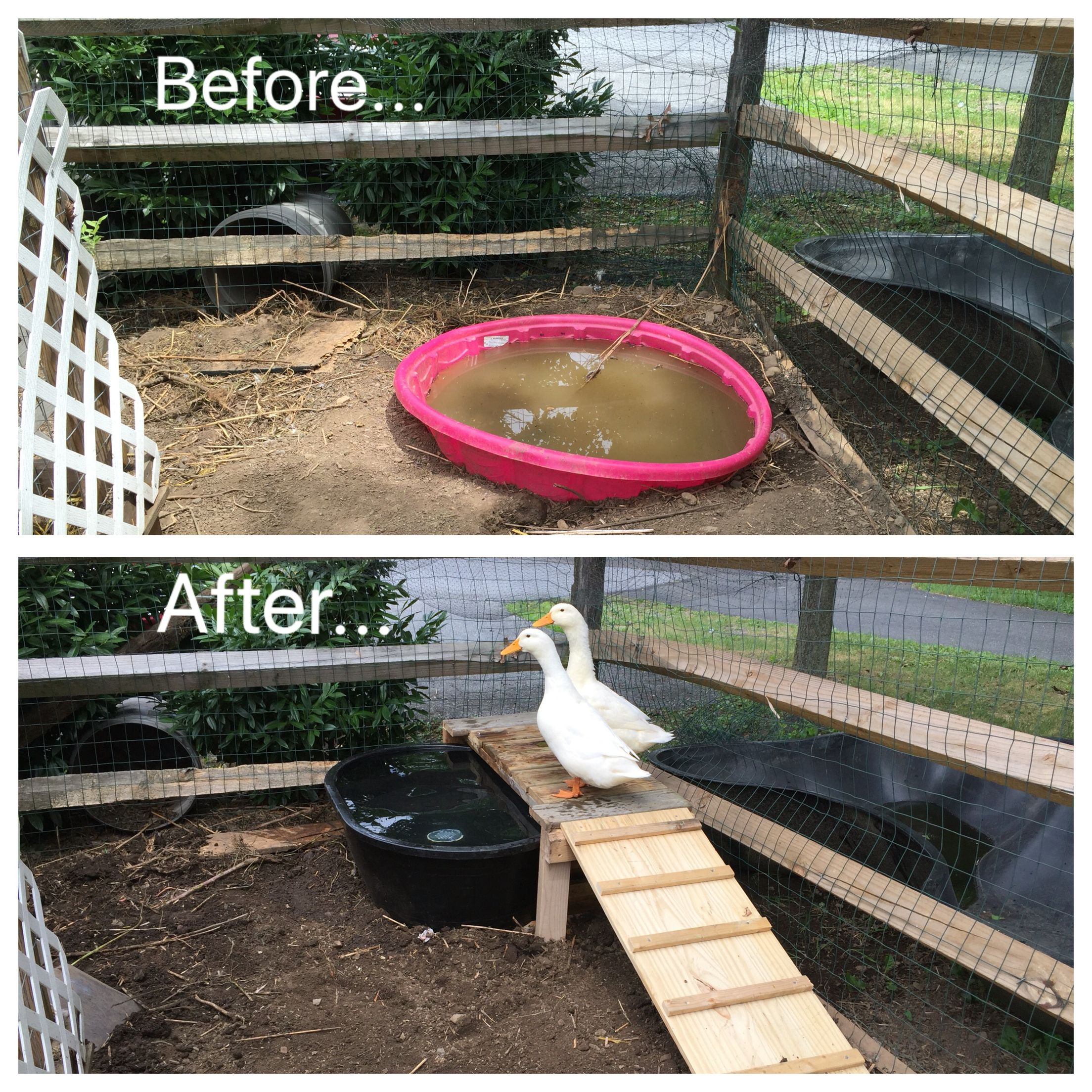 Diy duck pond with ramp and platform made from pallets for Pond made from pallets