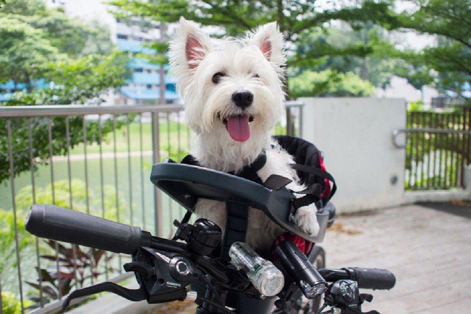 Buddyrider Buddy Rider Booster Pet Seat For Dogs In Australia