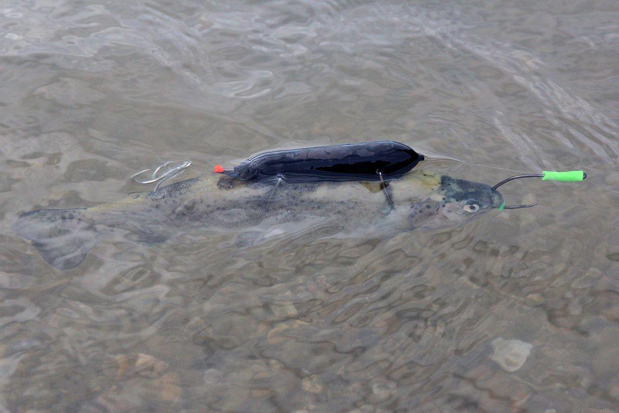 Raubfische In Deutschland