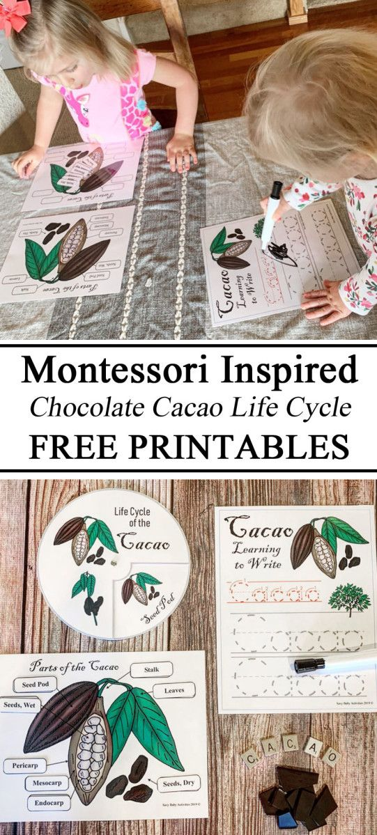 Life Cycle of the Cacao Plant/Seed in 2020 Life cycles