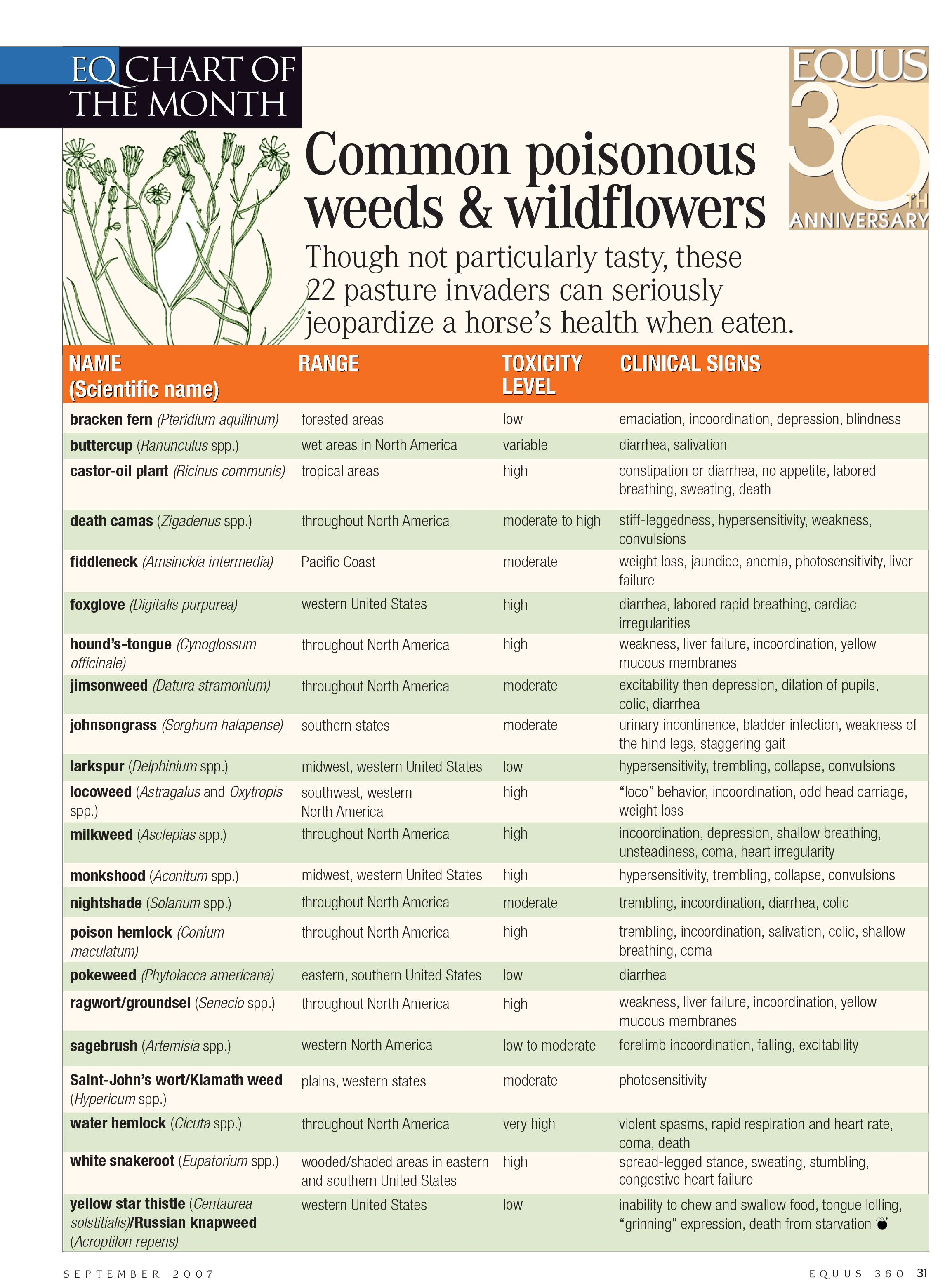 Check out this list of common pasture invaders that may be dangerous ...
