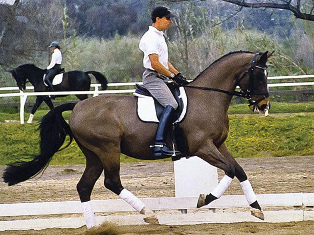 Fearless Flying Changes Horses, Horseback riding